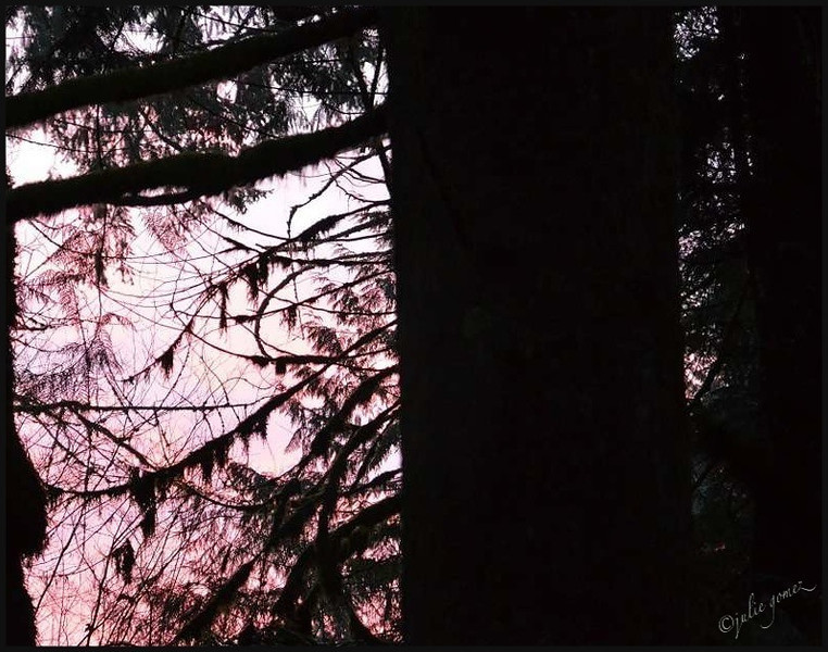 Pink December Sunrise