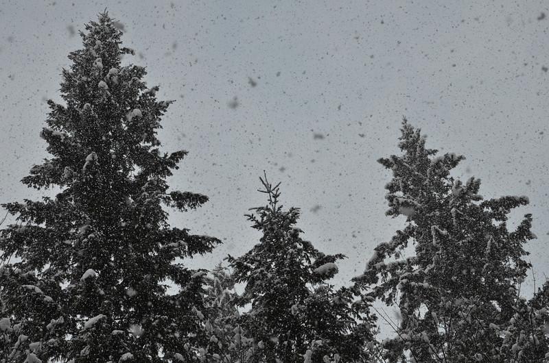 December Snowstorm