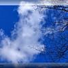 Wispy Clouds over Wildwood