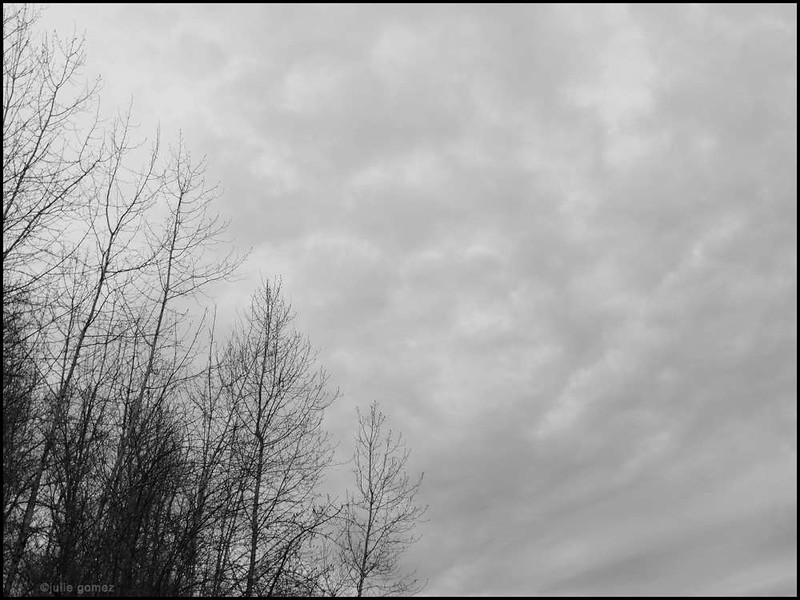 Winter Trees and Gray Sky