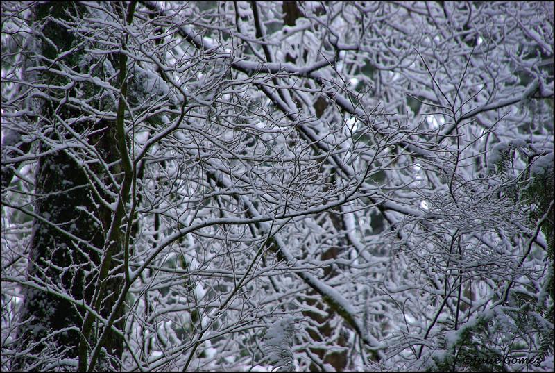 March Snowstorm