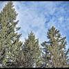 Sun-struck Treetops