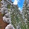 Winters Icebox