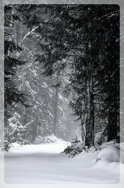 First Snow ~ Autumn Snow