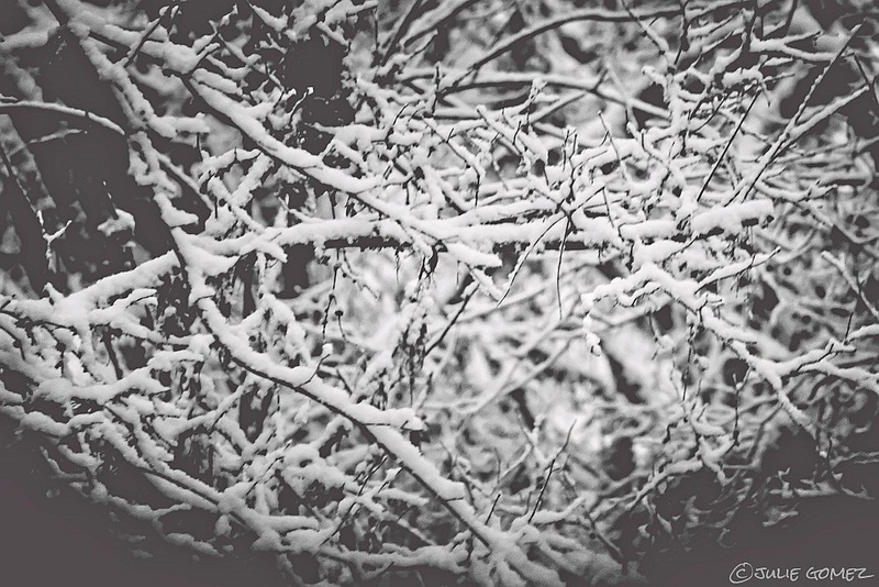 Twigs and Snow