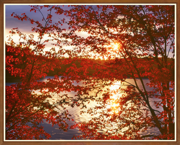 Sunset Through Red Leaves, Walden Pond I