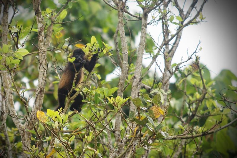 130415_Nicaragua Jungle_8175 as Smart Object-1