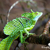 130415_Nicaragua Jungle_8302 as Smart Object-1 (1)