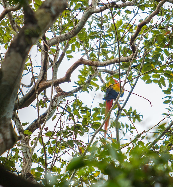 130415_Nicaragua Jungle_8258 as Smart Object-1