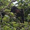 130415_Nicaragua Jungle_8190 as Smart Object-1