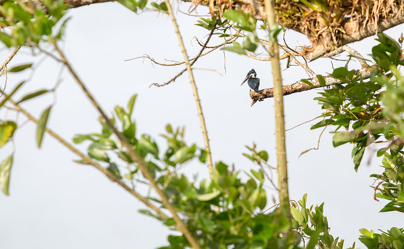 130415_Nicaragua Jungle_8561 as Smart Object-1
