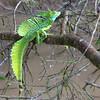 130415_Nicaragua Jungle_8299 as Smart Object-1