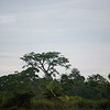 120415_Nicaragua Jungle_8641 as Smart Object-1