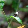 130415_Nicaragua Jungle_8272 as Smart Object-1