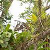 130415_Nicaragua Jungle_8364 as Smart Object-1