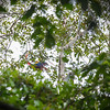 130415_Nicaragua Jungle_8263 as Smart Object-1