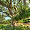 New Orleans , Lousiana Tree
