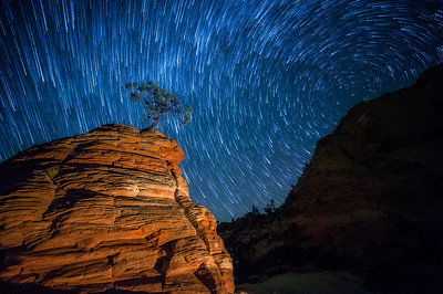 Star Trails Over Little Bonzai