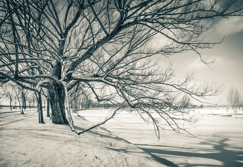 How to Edit Snowy Landscapes - Use Duotone Treatment Green