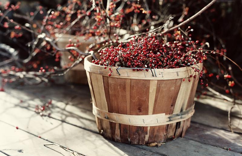 Hurd Orchards, Holley, NY. Photo by Brandon Vick, http://www.brandonvickphotography.com/