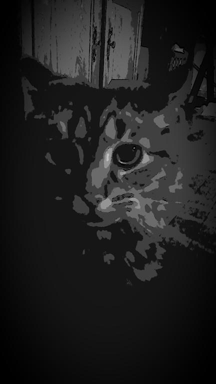 WEEK 77 - ANIMAL - DAWN KRAUSE 1