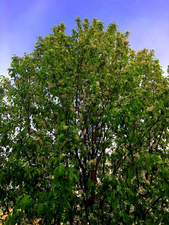 WEEK 84 - TREE - CATHIE RALEY 2