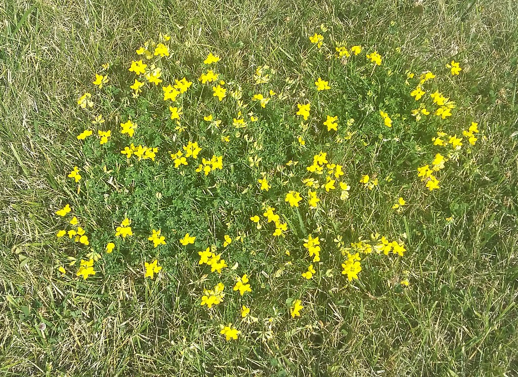 WEEK 95 - FLOWER - MIKE VEST