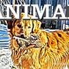WEEK 77 - ANIMAL