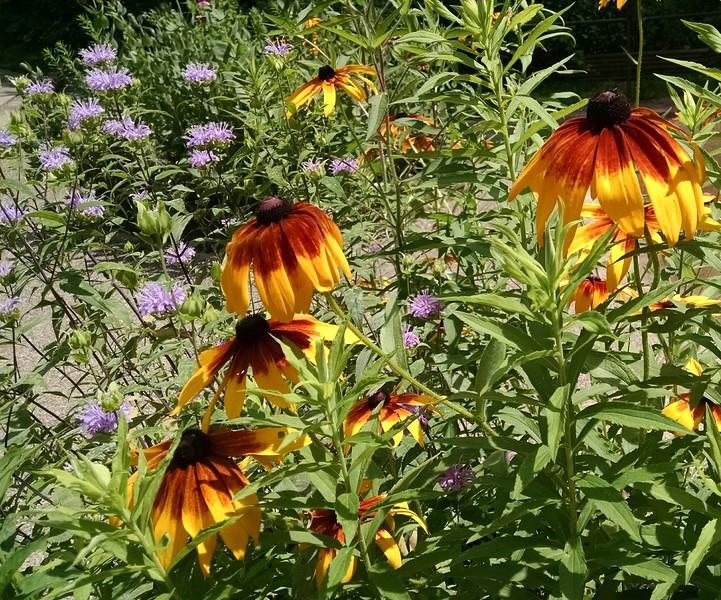 WEEK 95 - FLOWER - SHANNON BARDOLE