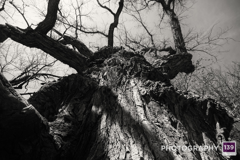 LOSER - TREE