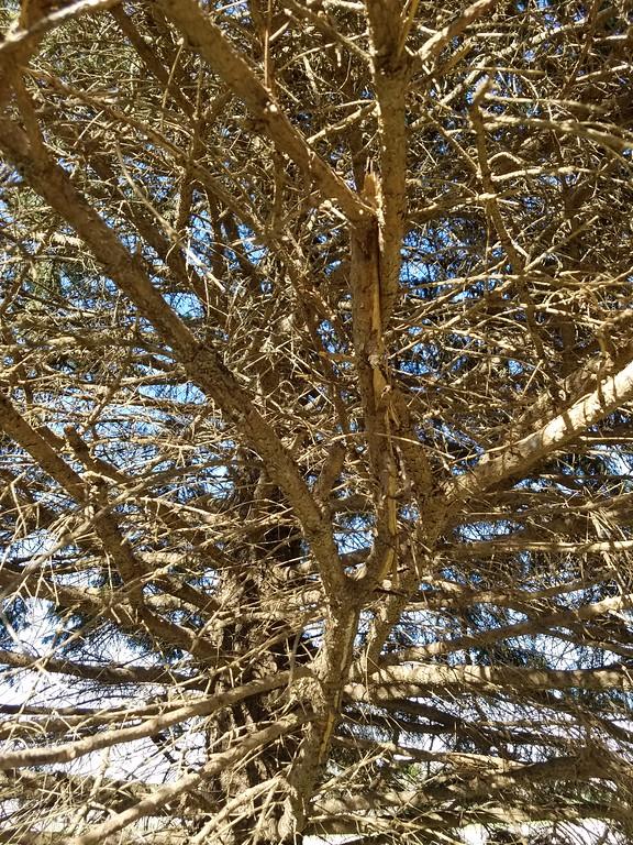 WEEK 84 - TREE - CARLA STENSLAND 2