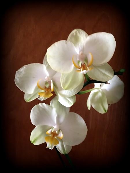 WEEK 95 - FLOWER - CATHIE RALEY 3