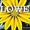 WEEK 95 - FLOWER
