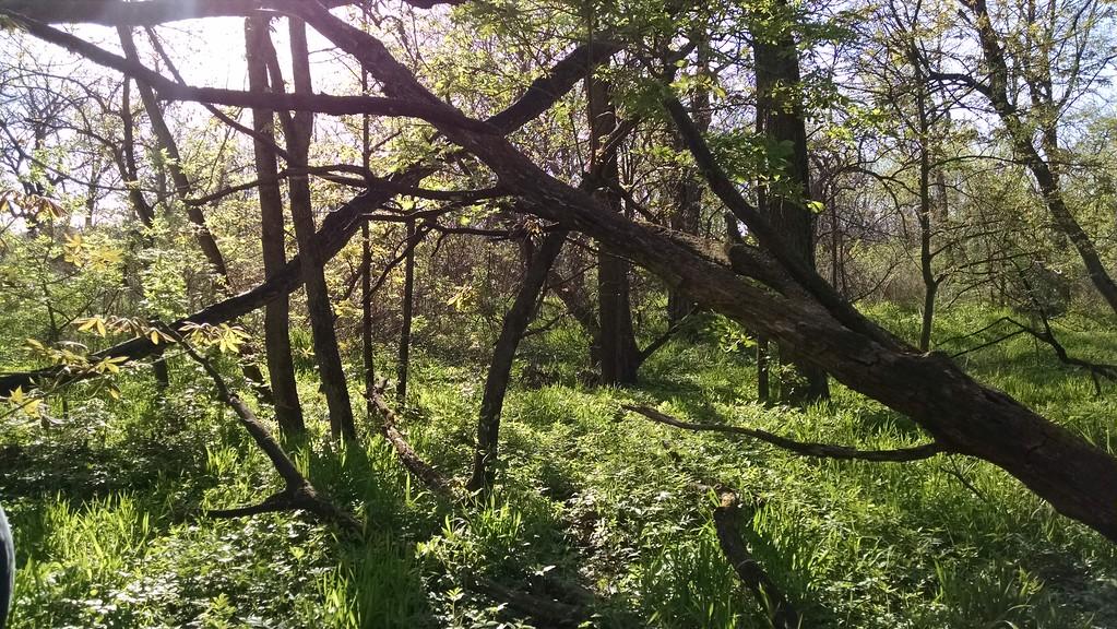 WEEK 84 - TREE - SHANNON BARDOLE