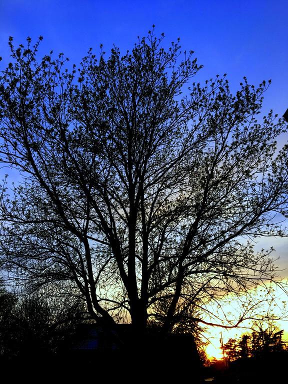 WEEK 84 - TREE - CATHIE RALEY 1