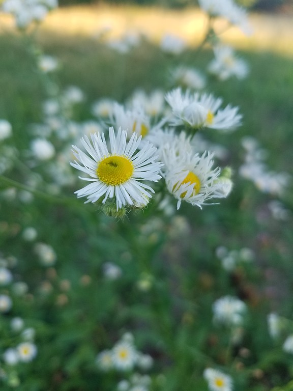 WEEK 95 - FLOWER - CARLA STENSLAND 1