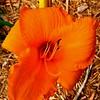 WEEK 95 - FLOWER - CATHIE RALEY 1