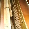 WEEK 75 - MUSIC - SHANNON BARDOLE