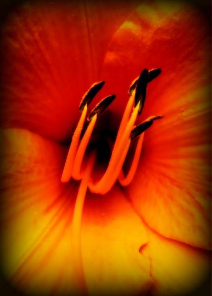 WEEK 95 - FLOWER - CATHIE RALEY 2