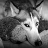 WEEK 77 - ANIMAL - CATHIE RALEY 1
