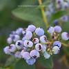 WEEK 95 - FLOWER - ANGIE DEWAARD