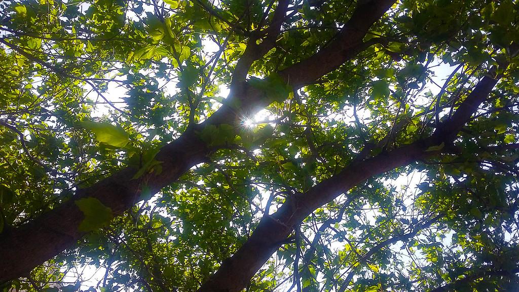 WEEK 84 - TREE - MIKE VEST