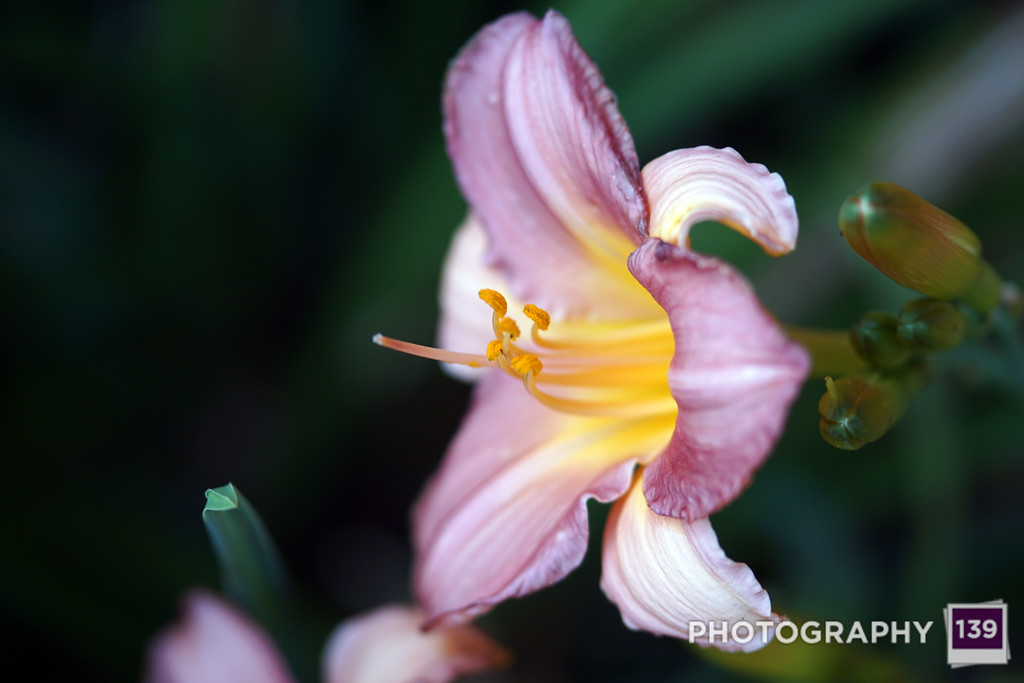 LOSER - FLOWER