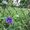 WEEK 95 - FLOWER - STEPHANIE KIM 1