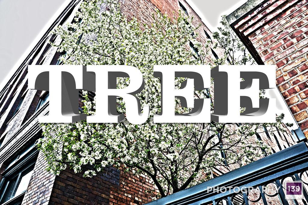 WEEK 84 - TREE