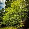 WEEK 152 - TREE - CATHIE RALEY