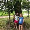WEEK 152 - TREE - KIM BARKER
