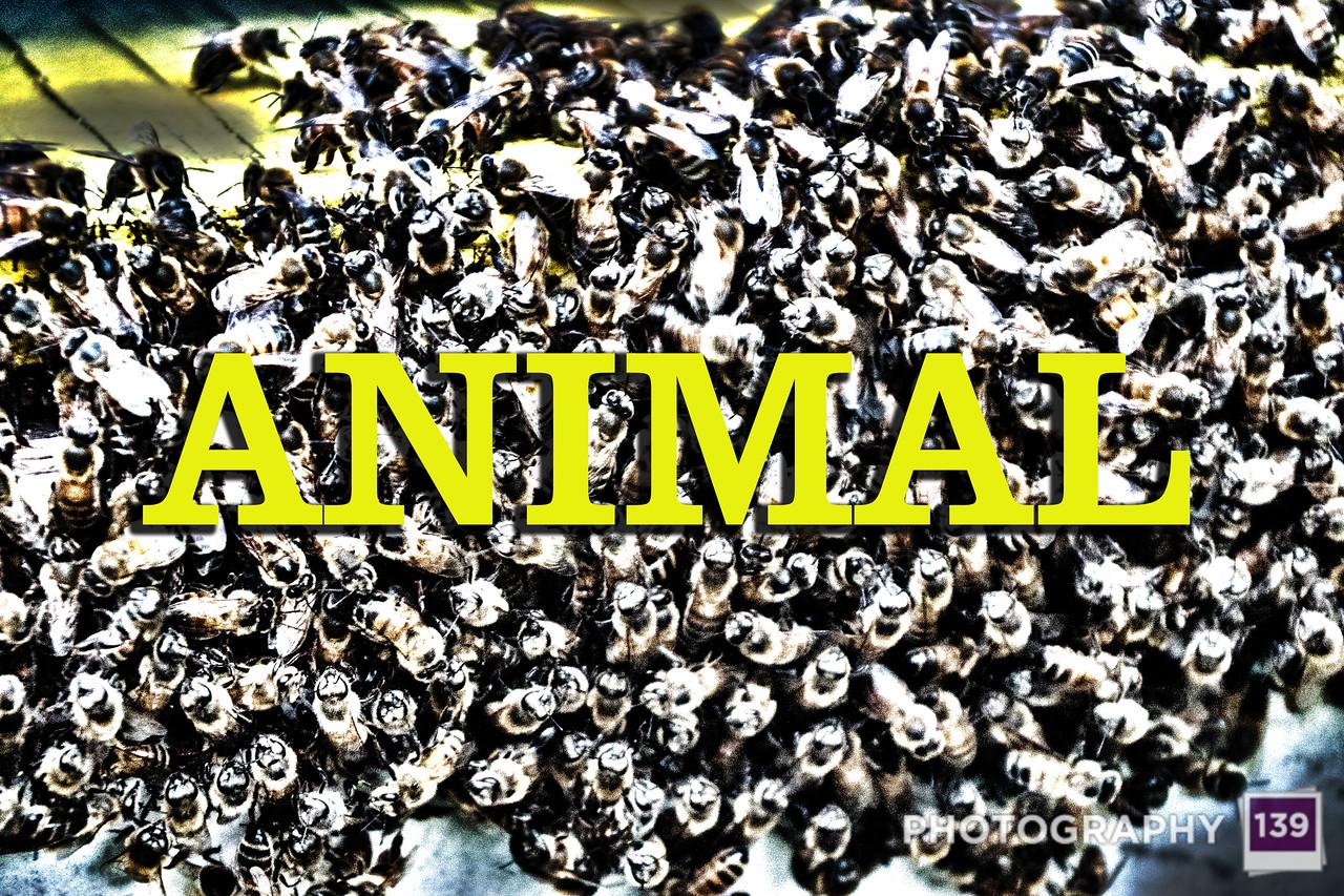 WEEK 153 - ANIMAL