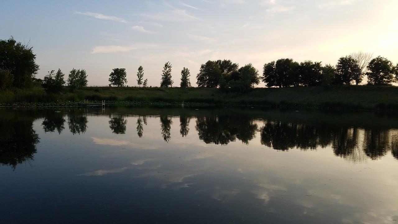 WEEK 152 - TREE - MICKY AUGUSTIN