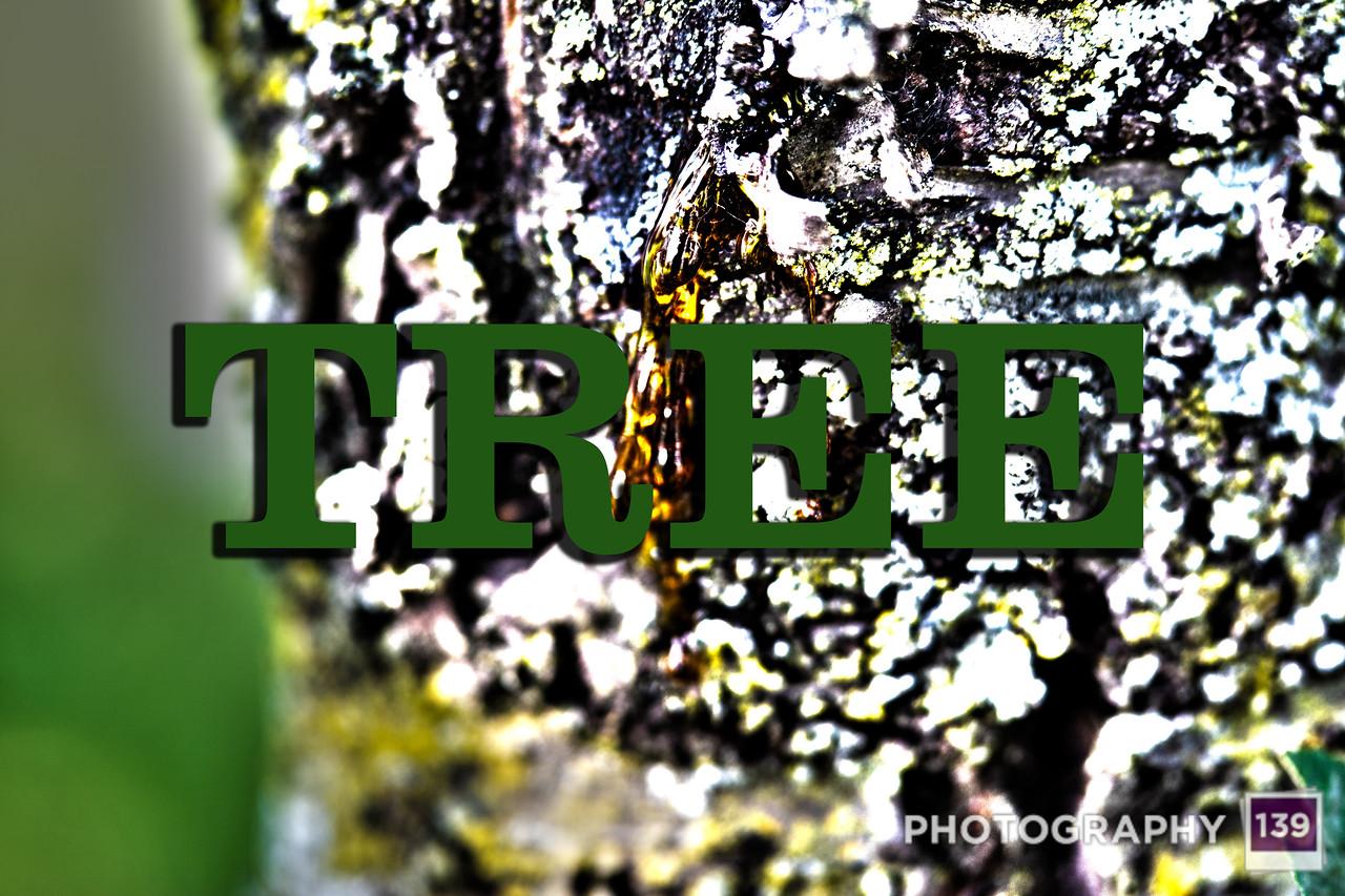 WEEK 151 - TREE